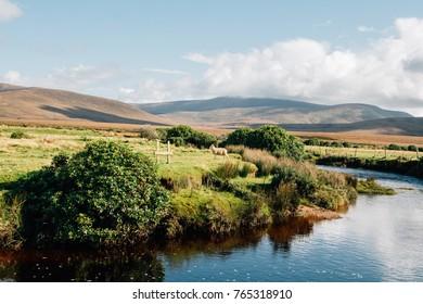 Sheep on the river bank