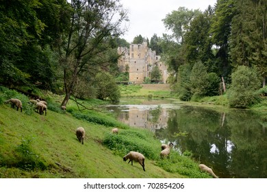 Sheep on the waterside of a pond in front of the ruins of Beaufort castle, reflection of the castle