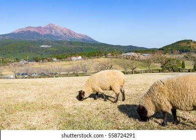 Sheep pasture with mount Kirishima