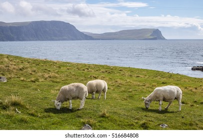 Sheep pasturing on the shore of Atlantic Ocean bay at Neist Point, Isle of Skye, Scotland