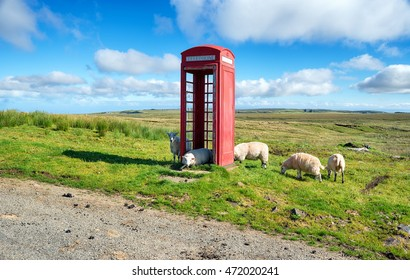 Sheep in a red telephone box on the Isle of Skye in Scotland
