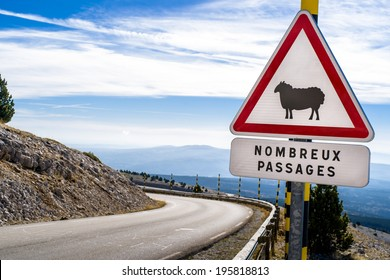 Sheep Road Sign, France, Mountain, ventoux