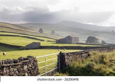 sheep in scottish highlands