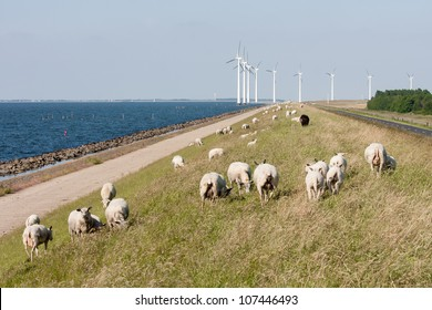 Sheep, sea and windturbines in the Netherlands