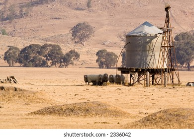 Sheep in the shade at a water tank in rural Australia.  The tank was filled by the windmill, but is now filled by a pump.  The area is in the middle of a long standing drought.