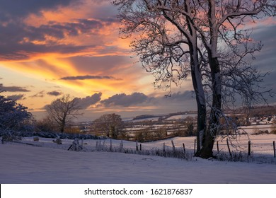 Sheep in Snow with sunset near Mickleton, Cotswolds, Chipping Campden, Gloucestershire, England