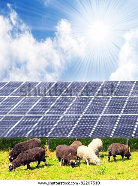 Sheep and solar energy panels against sunny sky.  Ecological farming metaphor.