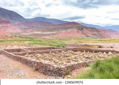 Sheep Stone Pen in the Andes Region, South America