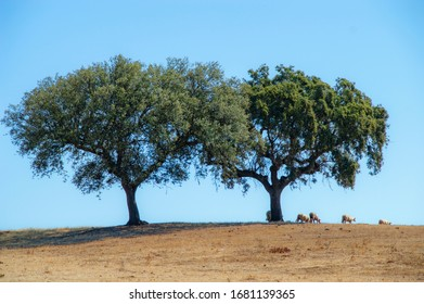Sheep and Trees view in a Portuguese village