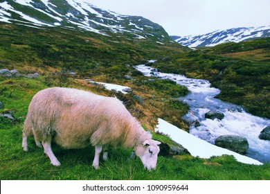 Sheep in tundra biome landscape in Norway. Mountain stream in Aurlandsfjellet. Vintage filter stylized colors.