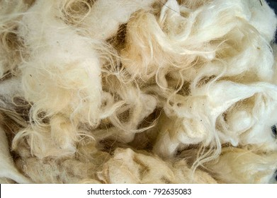 sheep wool, quilt and pillows are used to make sheep wool, healthy and natural sheep wool,