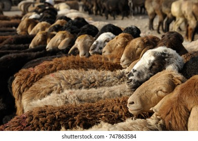 "Sheep at ""Zhongxiya Shichang"" or in Uyghur ""Yekshenba"" bazaar. It is a very popular Sunday animal market in Kashgar. It attracts villagers, nomads and tourists. Men trading sheep."