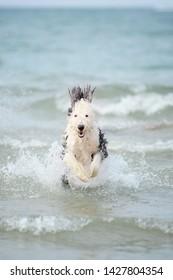 Montrose Dog Beach Images, Stock Photos & Vectors | Shutterstock