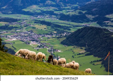 Sheeps in high Alps mountains in Austria