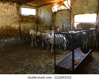 Sheeps inside the barn.