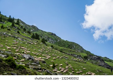 Sheeps In A Meadow In The Mountains, Beautiful Natural Landscape On Transfagarasan Mountains In Romania