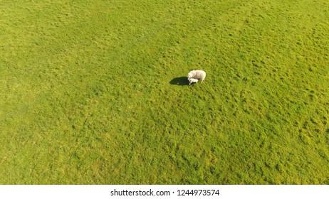 Sheeps Minehead England