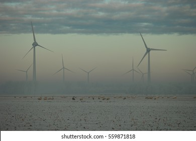sheeps and Offshore Windmill farm Westermeerwind windmills on a cold snowy winter morning by Urk Flevoland Noordoostpolder January 2017