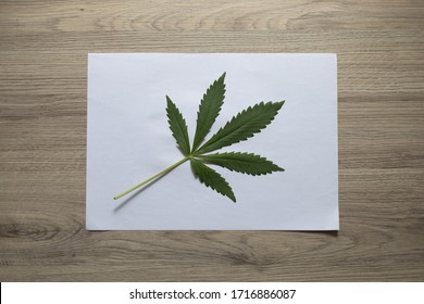 A sheet of cannabis on a sheet of white paper. Top view, wooden background