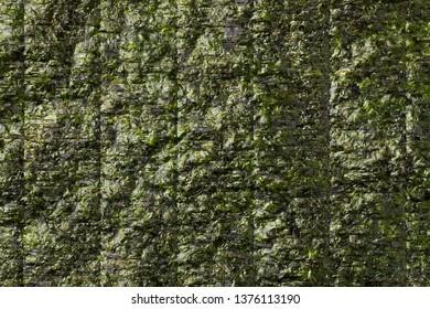 Sheet of dried green nori full frame