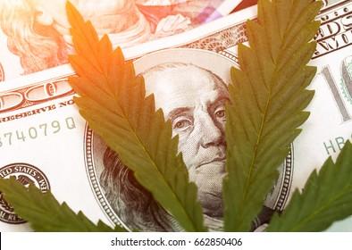 Sheet of marijuana in the sunlight Money with  leaves close. Hemp