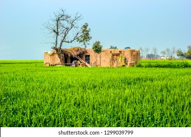 Sheikhupura: dated 09/03/2014, Village mud house A family live in home roundabout surrounding area green wheat filed, district of Sheikhupura Punjab Province of Pakistan.