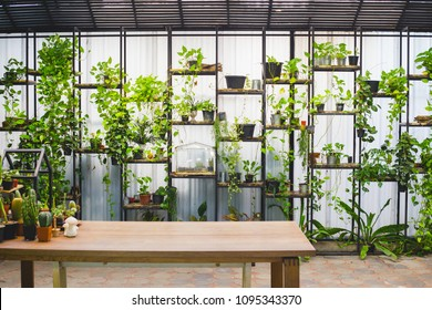shelf and box of tree plants decoration on wall