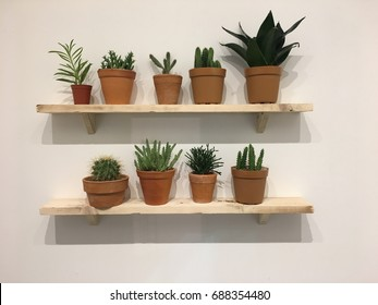A shelf filled with Cactus, popular for indoor decoration (taken by mobile phone camera)