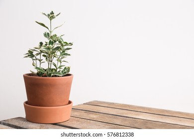 Shelf and a plant.