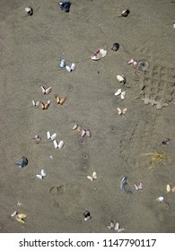 Shell butterflies and foot step on wet sand background. Ocean sand background