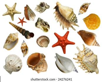 Shell Collection, isolated