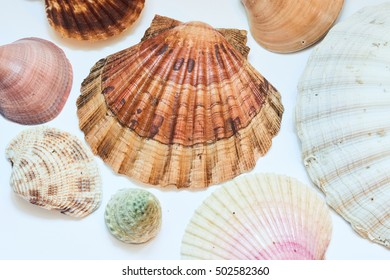 shell - color filter