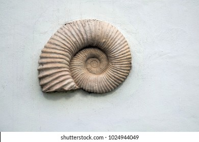 Shell decor on a wall in Lanzarote . Canary island.Spain.Europe.