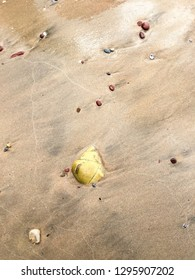 shell embed in beach sand with sand sea flow background