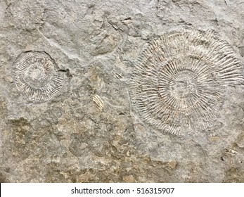 Shell fossil  in stone background