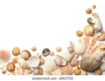 Shell  frame on white background