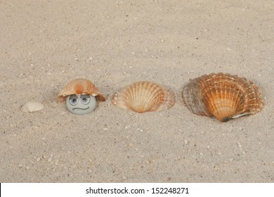 shell game with pearl and seashells on beach