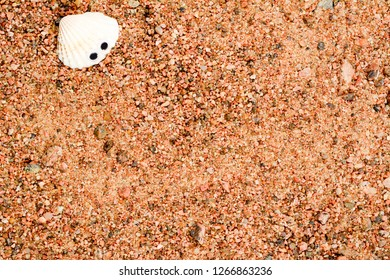 Shell with googly eyes lying on the sea sand, sand background. Close-up.