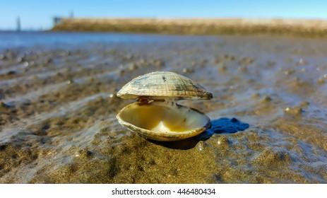 Shell life