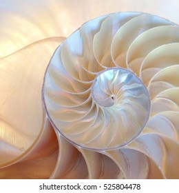 shell nautilus Fibonacci section spiral pearl symmetry half cross golden ratio structure growth close up back lit ( pompilius nautilus ) - stock photo photograph image, picture