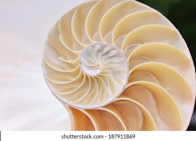 shell nautilus fibonacci symmetry pearl spiral golden ratio cross section sequence spiral structure growth pompilius seashell swirl stock, photo, photograph, image, picture