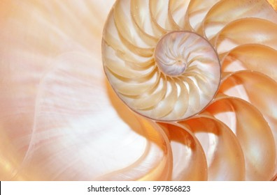 shell nautilus pearl Fibonacci symmetry cross section spiral structure growth golden ratio background mollusk (nautilus pompilius) copy space half split