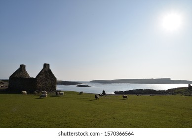 Shell of old stone Shetland croft house, in short grass pasture with Shetland sheep grazing and calm blue sea with a low island in the background under sun in clear blue sky.