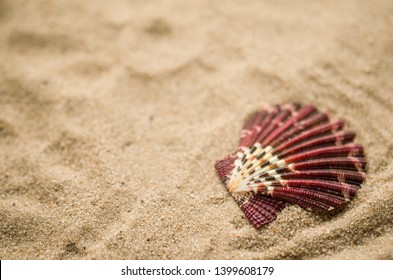 Shell on beach, holiday background
