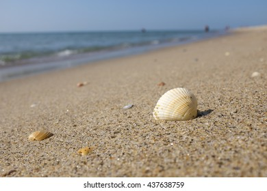 Shell on the beach with people on background