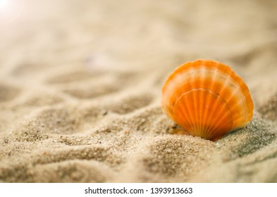 Shell on beach summer holiday background