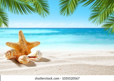 Shell on beach and summer time
