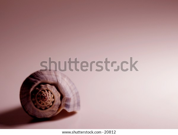 A shell on colored background.