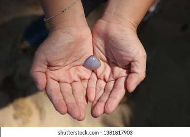shell on the hand in sunnlight