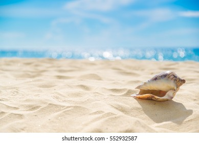 Shell on sand at beach and blue sky and bokeh sea